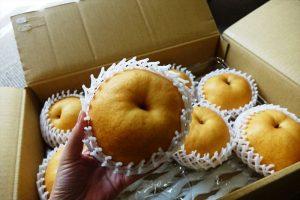 「米子の梨 あたご」秀玉8玉 5kg